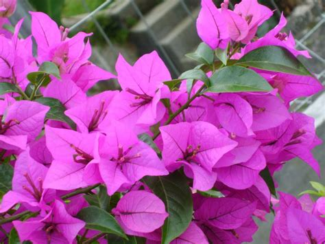 jenis bunga terindah  dunia  mampu membuatmu