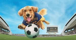 13 Dog Movies To Watch On Netflix