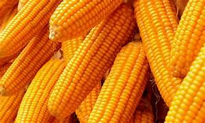Drought Resistant Crops: saving humanity through the ...