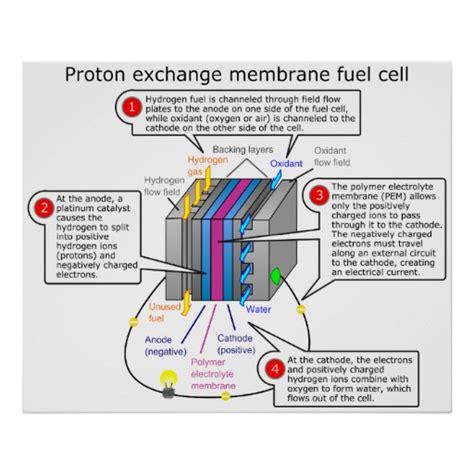 Proton Exchange Membrane Fuel Cell by Proton Exchange Membrane Fuel Cell Diagram Poster Zazzle