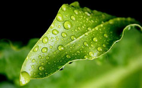 art pictures: Rain Drops On A Leaf