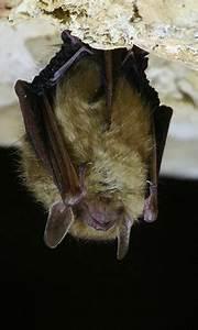 Repulsif Chauve Souris Efficace : maison abri chauves souris animaux sauvages ~ Melissatoandfro.com Idées de Décoration