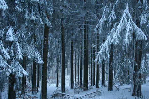 image libre neige hiver bois froid gel arbre gelee