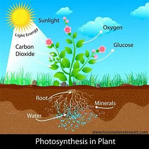 Diagram Of Plant Photosynthesis
