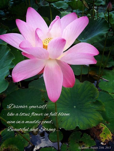 meaning  lotus flower memories pinterest flower