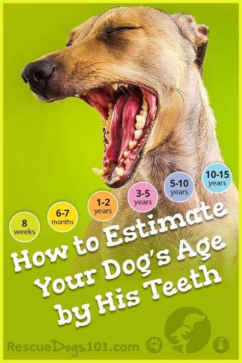 checking  dogs age   teeth dog training