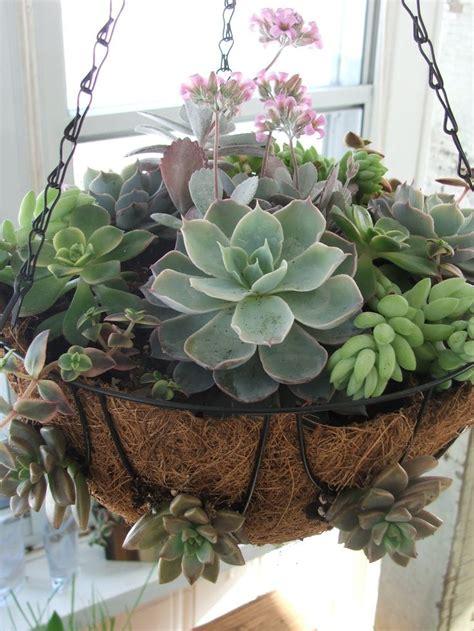 Succulent Planter Ideas Archives  Fresh Gardening Ideas