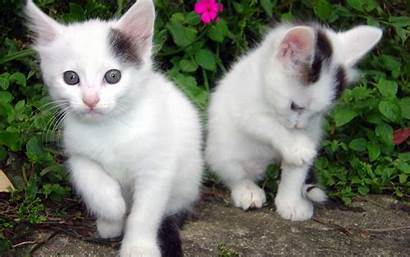 Cats Wallpapers Kittens Cat Animal Kitten Animals