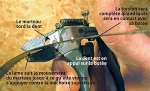 Ponceuse à Ruban : l 39 avoyage d 39 une lame de scie ruban bois le bouvet ~ Premium-room.com Idées de Décoration