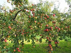 A Guide To Planting A Wonderful Permaculture Fruit Tree