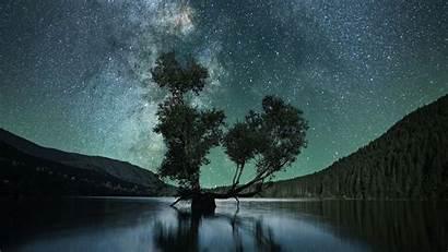 Sky Starry Tree Lake Night Background Ultrawide