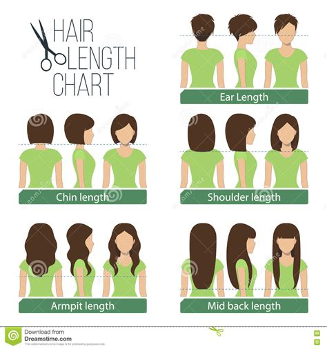 Hair Length Chart Stock Vector Illustration Of Hairstyle