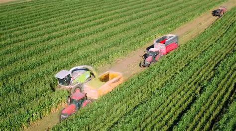 chambre d agriculture 12 le sorgho donne du relief au maïs entraid