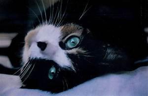 Black Cat With Blue Eyes Tumblr | www.pixshark.com ...