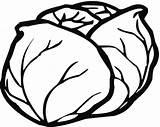 Lettuce Coloring Printable Categories sketch template