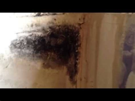 black mold in kitchen cabinets mold ta florida kitchen cabinets 7893