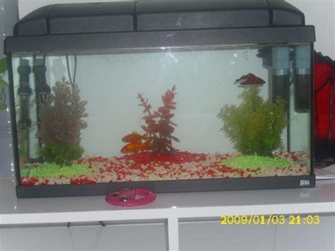 poisson attaque combattant aquariums et vivariums forum animaux