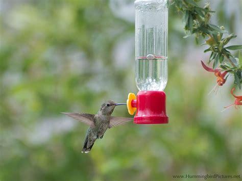 humming bird feeder hummingbird feeders hummingbird pictures