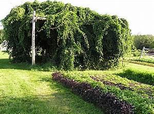 Tailler Les Kiwis : construire une treille pour la vigne ma passion du verger ~ Farleysfitness.com Idées de Décoration