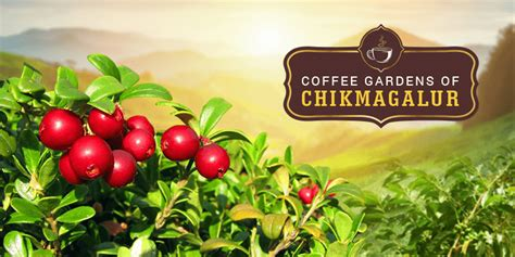 Use coffee grounds to add nutrients to your soil.9 x expert source ben barkan garden & landscape designer expert interview. A Trip to Coffee Gardens of Chikmagalur - RailYatri Blog