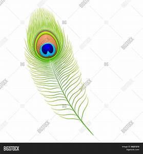 Peacock feather. Vector. Stock Vector & Stock Photos ...