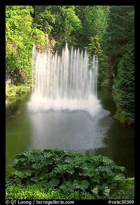 picturephoto ross fountain butchart gardens victoria