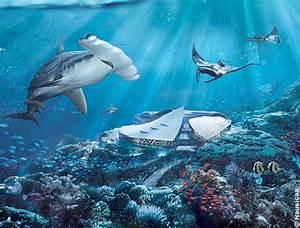 Mandataire Auto Boulogne Sur Mer : en famille boulogne sur mer nausica le plus grand aquarium d 39 europe ~ Medecine-chirurgie-esthetiques.com Avis de Voitures