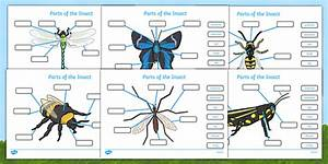 Parts Of An Insect Labelling Worksheets