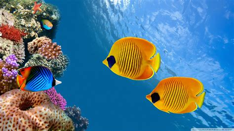 Wallpaper Tropical Beautiful Fish 1920 X 1080 Full Hd