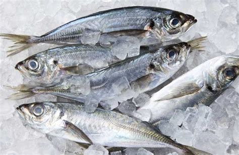 cuisiner poisson surgelé poisson surgelé poisson gift