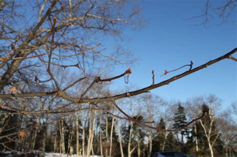 Maine Winter Vacation
