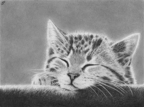 Sleepy Kitten Original Portrait Graphite Pencil Drawing