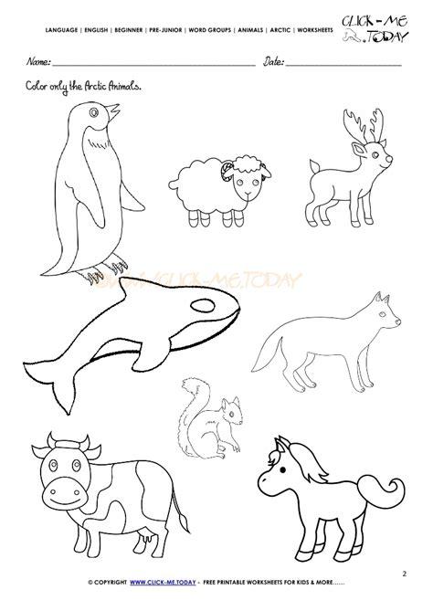 arctic animals worksheet activity sheet color 2