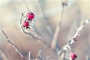 Hortensien überwintern Im Keller : zimmerzypresse schneiden so bringen sie sie in form ~ Frokenaadalensverden.com Haus und Dekorationen