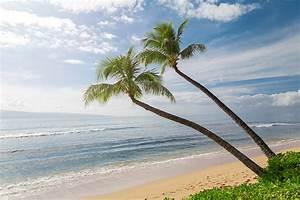 Bilder Von Palmen : fotos von hawaii vereinigte staaten natur ozean sand palmen himmel ~ Frokenaadalensverden.com Haus und Dekorationen