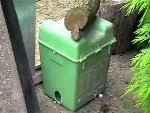 Ratten vangen met klem