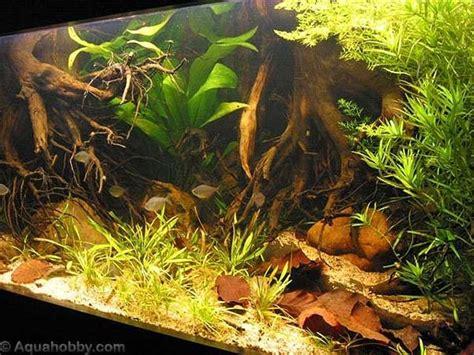 root aquascape aquascaping  roots aquarium fish