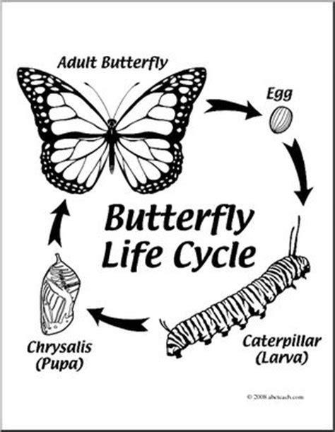 butterfly life cycle clipart black  white