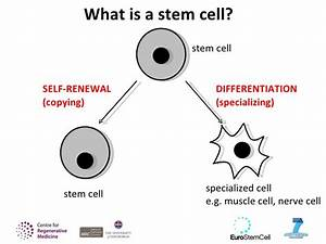 Introducing Stem Cells