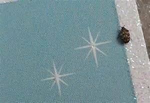 Variegated Carpet Beetle