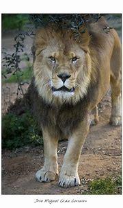 Photo taken with Canon EOS 6D Tamron 150-600 - Animal ...