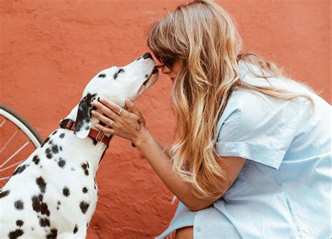 Having problems with ultimate pet partners insurance? Compare Pet Insurance Offers and Quotes   Forces Compare