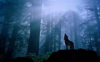 Wolf Midnight Desktop Backgrounds Pixelstalk