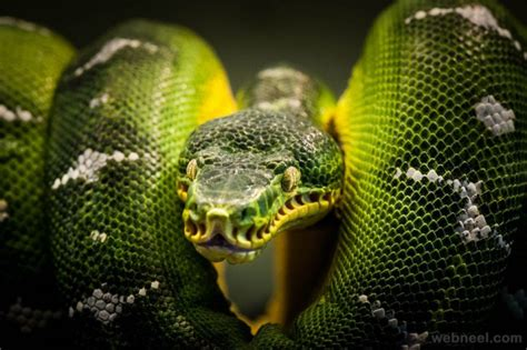 stunning examples  award winning wildlife photography