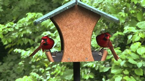 Backyard Bird Shop Locations by Ecotough Classic Feeder Birds Unlimited