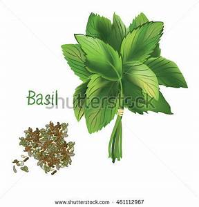 Dried Oregano Stock Images, Royalty-Free Images & Vectors ...