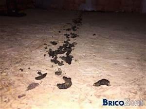 Crottes De Souris : souris ou musaraignes ~ Melissatoandfro.com Idées de Décoration