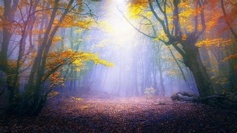 Fall Chrome Backgrounds by Free Enchanted Forest Chromebook Wallpaper Ready For