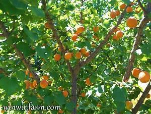 Fruit Tree Varieties for Arizona - winwinfarm.com