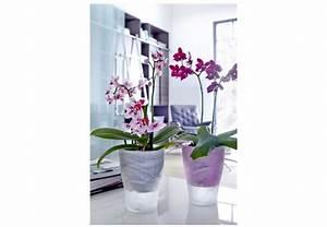 Luftwurzeln Bei Orchideen : orchideen pflegen profitipps von obi ~ Frokenaadalensverden.com Haus und Dekorationen